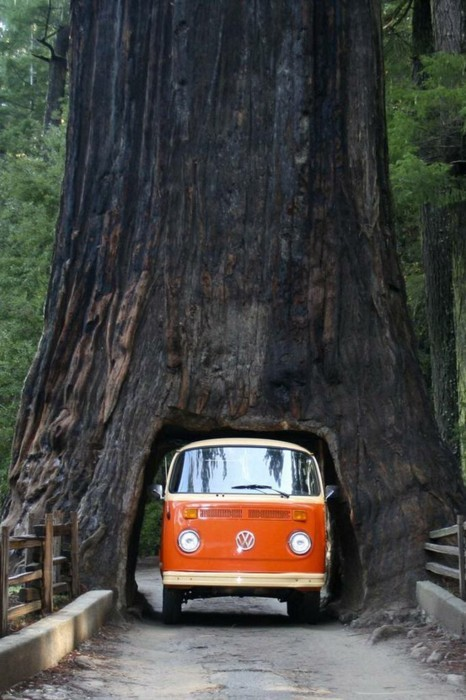 Drive Thru Tree Sequoia National Forest California